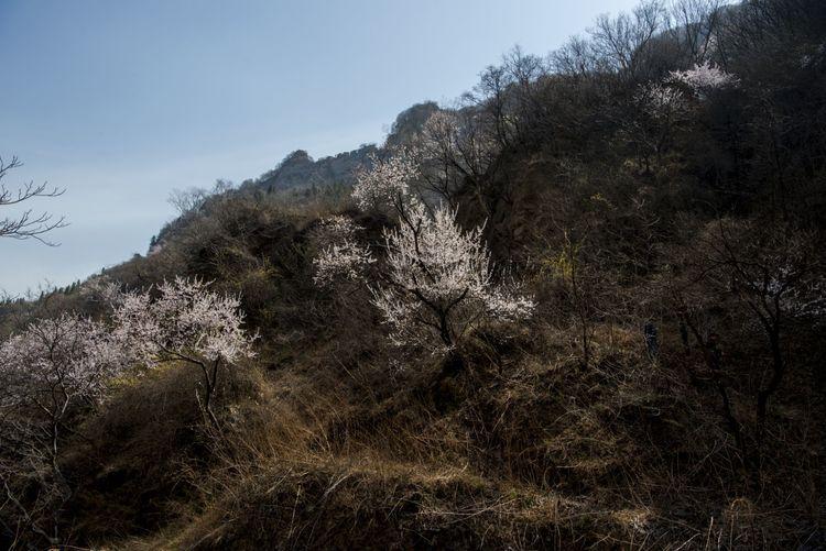 郑州市摄影家协会赴巩义涉村镇采风活动